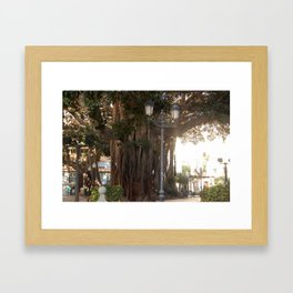 Ancient Trees and Lights Framed Art Print