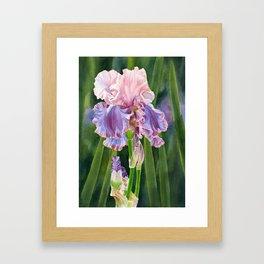 Iris Florentine Silk with Leaves Framed Art Print