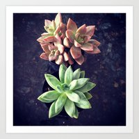 succulents Art Prints featuring Succulents  by Yellow Barn Studio