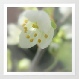 Blossom Time Art Print