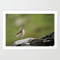 sparrow Art Prints featuring Sparrow by Distilled Designs