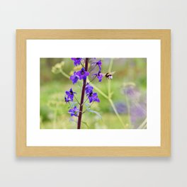 Flying bumble-bee in meadow Framed Art Print