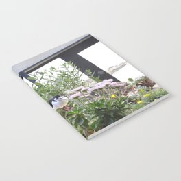 beautiful birds Notebook