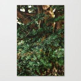 Needing Winter Canvas Print