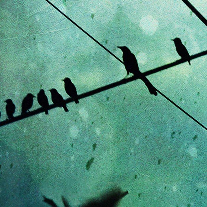 Bird City Leggings