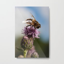 Thistle Hoverfly Metal Print
