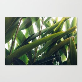 Topical Canvas Print