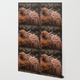 Highland Coo Wallpaper