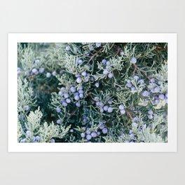 Botanical Gardens Evergreen #335 Art Print
