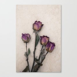 four dried roses Canvas Print