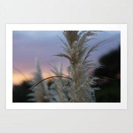 Pampas Grass & Sunset Art Print