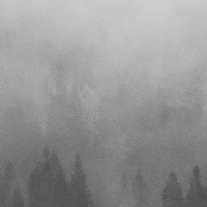 Minimalist Modern Black And white photography Landscape Misty Black Pine Forest Watercolor Effect Sp Leggings
