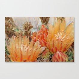 Desert Bloom Canvas Print