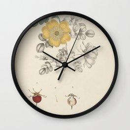 rosa lutea71 Wall Clock
