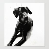great dane Canvas Prints featuring Great Dane by Sophie Elaina