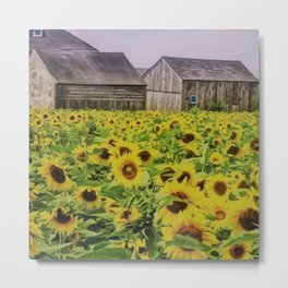 Summer Sunflower Fields, New England by Jeanpaul Ferro Metal Print