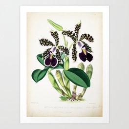 Dark Purple Vintage Orchid Art Print