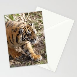 Tiger20151020 Stationery Cards