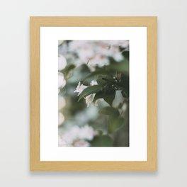 Pink Belles, I Framed Art Print