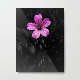 Perfect Pink Metal Print