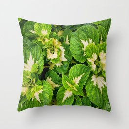 Green Leaves of Madison Avenue Throw Pillow