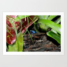 Poison Dart Frog- Young Froglet Art Print