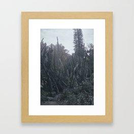 Cactus dream Framed Art Print