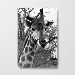 Crooked Horn Giraffe; Black and White Nature Photography from Africa Metal Print