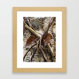 Silver Birch tree (Betula Pendula) leaves and bark detail. Norfolk, UK in Winter Framed Art Print