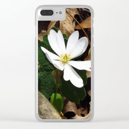 Bloodroot in Bloom Clear iPhone Case
