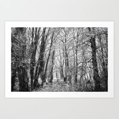 Winter Forest scenic. Art Print