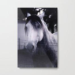 White Whisperer Metal Print
