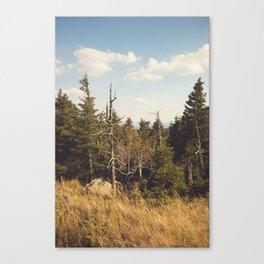 Brocken Mountain Trail Canvas Print