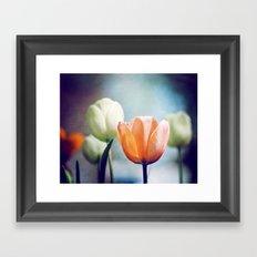 Orange Tulip Navy Blue Flower Photography, Coral Peach Floral Nature Framed Art Print