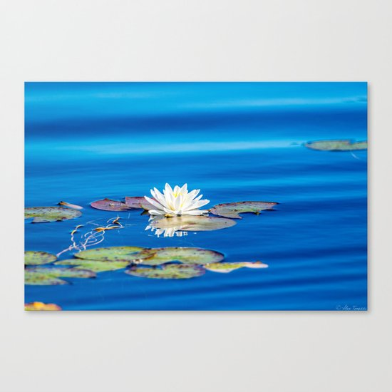 Cool Blues Canvas Print