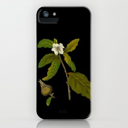 Messpilus Germanica Mary Delany Delicate Paper Flower Collage Black Background Floral Botanical iPhone Case