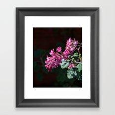 Ribes Buds Framed Art Print