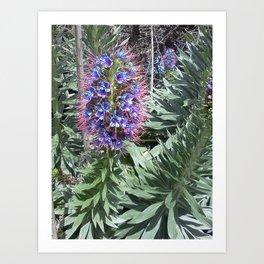 Monterey Art Print