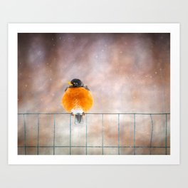 Red Robin on fence Art Print