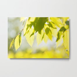 Young Elm leaves on blurred green Metal Print