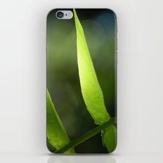 Light through the Leaves iPhone & iPod Skin