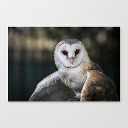 Common Barn Owl portrait. Canvas Print