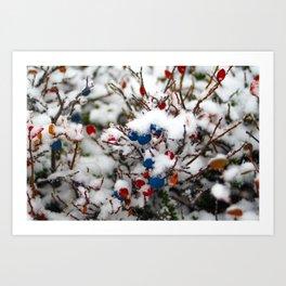 Blueberries, first snow Art Print