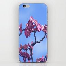 jason's dogwood pink iPhone & iPod Skin