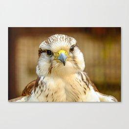 Gyrfalcon Falcon Closeup Canvas Print
