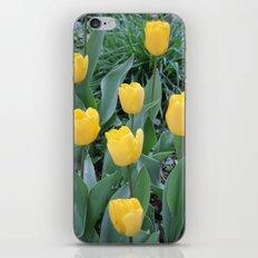 Appledorn Tulips iPhone & iPod Skin