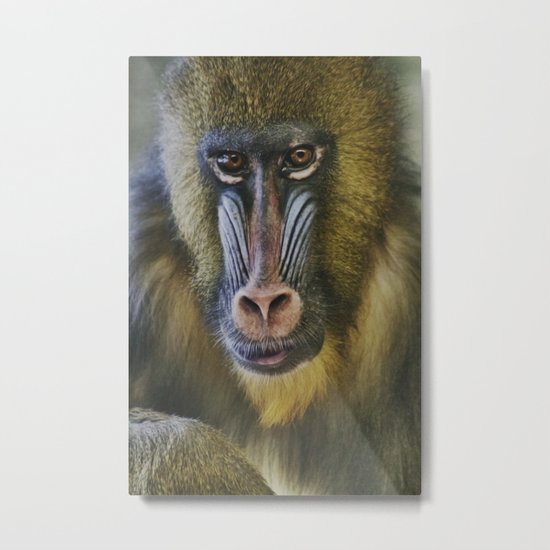 Princess the Mandrill Metal Print