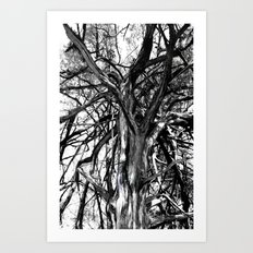 broken boughs Art Print