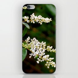Summer White Flowers iPhone Skin