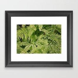 ferns. Framed Art Print